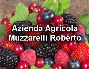 Clicca per entrare nella pagina dell'Azienda Agricola Muzzarelli Roberto