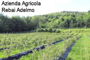 Clicca per entrare nella pagina dell'Azienda Agricola Rabai Adelmo