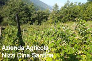 Clicca per entrare nella pagina dell'Azienda Agricola Nizzi Dina Santina